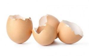cascas ovos