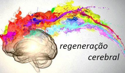cerebro7